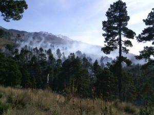 Talamontes deforestan Pico de Orizaba.