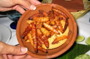 gusanos-zongolica